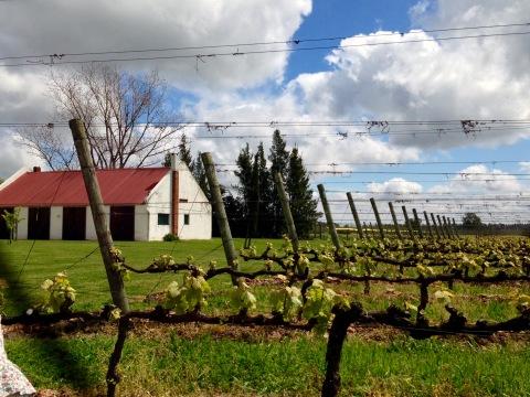 Tour com degustação na vinícola Bouzas, a dez minutos da cidade.